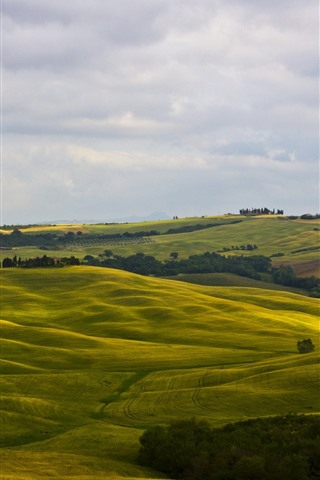 iPhone Wallpaper Italy, Montalcino, Tuscany, green fields, hills, trees, countryside