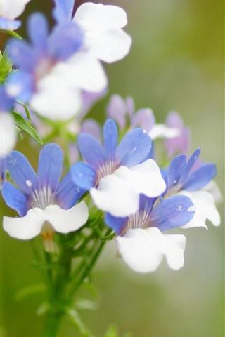 iPhone Papéis de Parede Pequenas flores, pétalas azuis e brancas