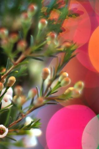 iPhone Papéis de Parede Pequenas flores, círculos coloridos de luz