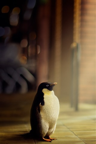 iPhone Wallpaper Lonely penguin, look, window, light rays