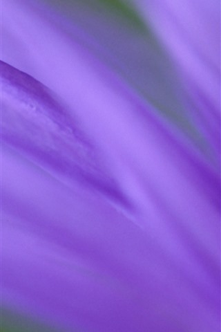 iPhone Wallpaper Purple petals macro photography, hazy