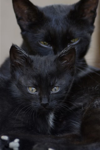 iPhone Wallpaper Two black cats