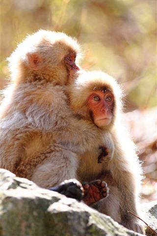iPhone Wallpaper Two monkeys, rock, sunshine
