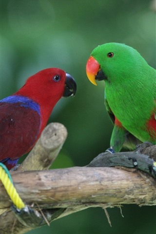 iPhone Wallpaper Two parrots, red and green