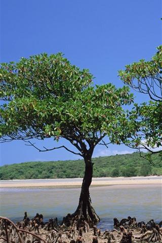 iPhone Wallpaper Two trees, coast, sea, beach