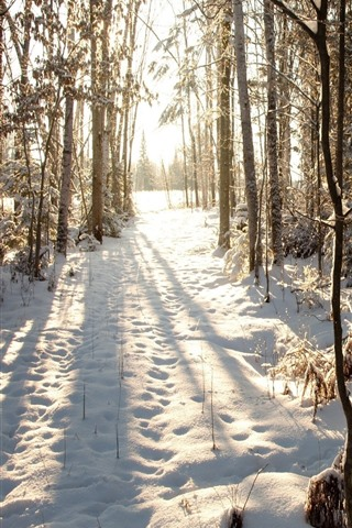 iPhone Wallpaper Winter, snow, trees, forest, sun rays, shadow