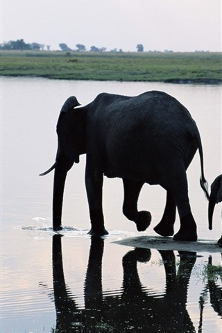 iPhone Wallpaper two elephants, family, river
