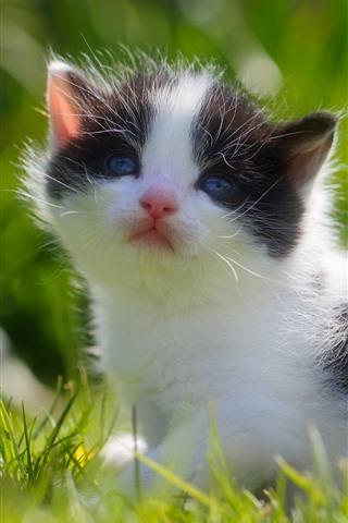 iPhone Papéis de Parede Gatinho fofo, bebê gato, grama