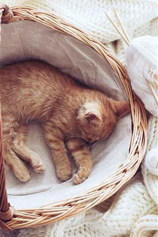 iPhone Papéis de Parede Gatinho fofo dormindo na cesta, suéter branco