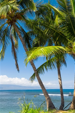 iPhone Hintergrundbilder Hawaii, Palmen, Meer, tropisch, Blätter, Himmel, USA