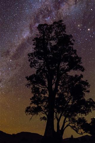 iPhone Wallpaper One tree, silhouette, starry, stars, night