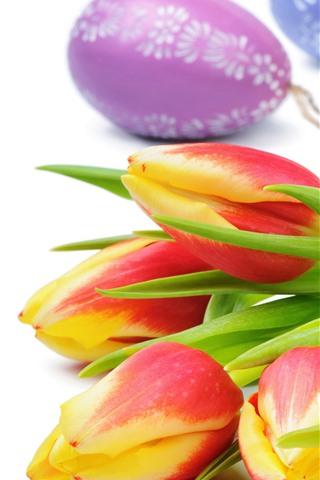 iPhone Fond d'écran Tulipes orange, fleurs, oeufs de Pâques, fond blanc
