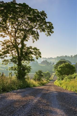 iPhone Wallpaper Road, trees, sun rays, village, morning