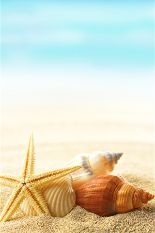 iPhone Wallpaper Starfish, shell, sands, sea