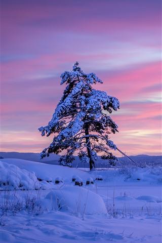 iPhone Wallpaper Sweden, lonely tree, snow, winter