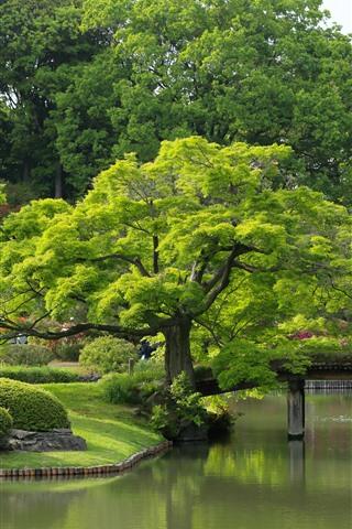 iPhone Wallpaper Tokyo, Rikugien Garden, trees, pond, park, green, Japan