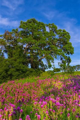 iPhone Wallpaper Tree, pink flowers, blue sky