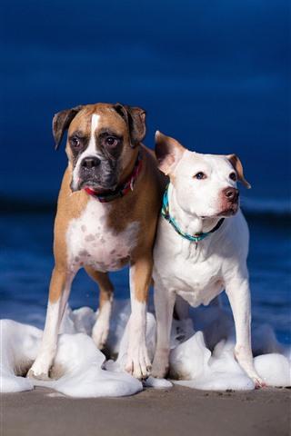 iPhone Обои Две собаки, пляж, пена, море
