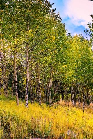 iPhone Wallpaper Birch forest, trees, sun rays, autumn