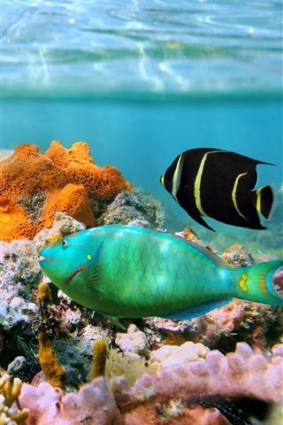 iPhone Обои Коралл, риф, под водой, тропическая рыба