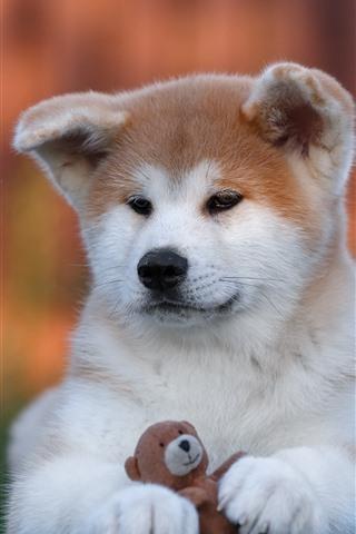 iPhone Papéis de Parede Filhote de cachorro fofo e urso de brinquedo