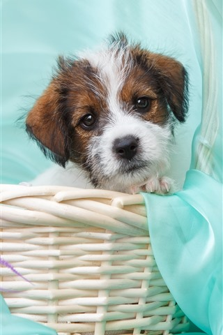iPhone Wallpaper Cute puppy, basket, purple flowers