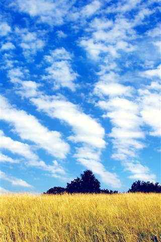 iPhone Papéis de Parede Campos, árvores, céu azul, nuvens