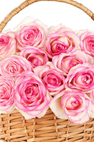 iPhone Wallpaper Pink roses, basket, white background