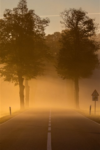 iPhone Wallpaper Road, trees, fog, morning, countryside