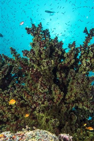 iPhone Обои Море, подводный мир, коралл, рыба