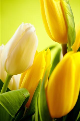 iPhone Papéis de Parede Algumas tulipas amarelas, folhas verdes