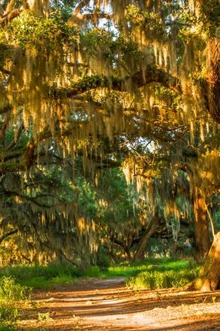 iPhone Обои Лето, деревья, трава, лес, солнечный свет