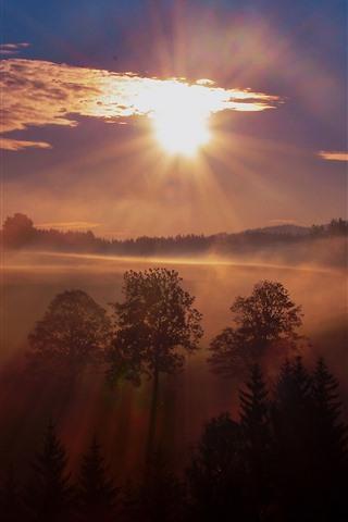 iPhone Обои Восход солнца, деревья, туман, утро, природа пейзаж