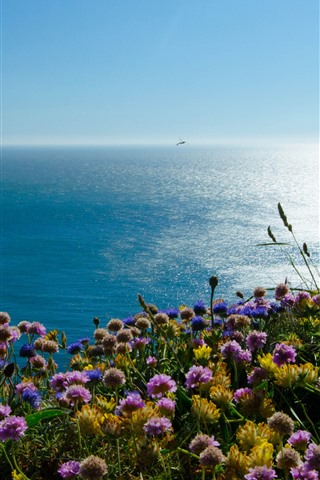 iPhone Wallpaper Wales, Irish Sea, Puffin Island, flowers, England
