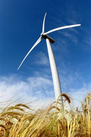 iPhone Wallpaper Wheat field, windmill, blue sky