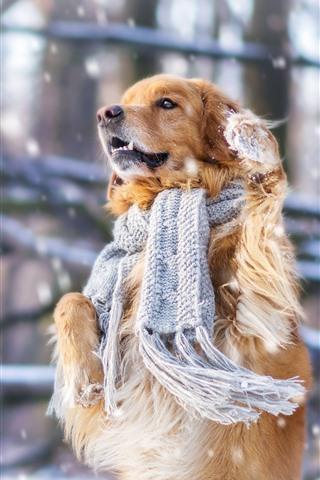 iPhone Wallpaper Dog, scarf, snow, winter