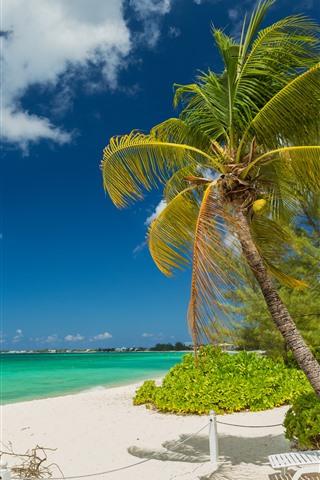 iPhone Wallpaper Palm trees, beach, sea, clouds, tropical