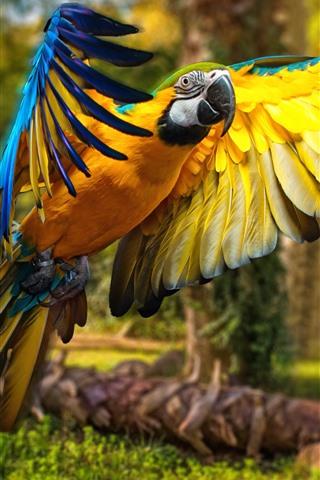 iPhone Wallpaper Parrot, macaw, flight, wings, bird