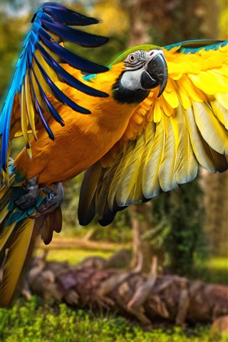iPhone Fond d'écran Perroquet, macaw, vol, ailes, oiseau