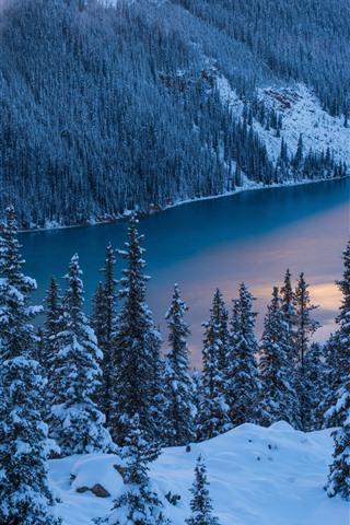 iPhone Fond d'écran Parc national Banff, hiver, arbres, neige, lac Peyto, Canada