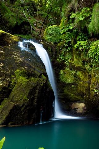 iPhone Обои Хорватия, Лес, Водопад, Зеленый Мосс