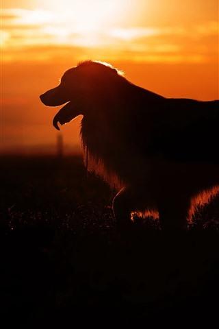 iPhoneの壁紙 犬、シルエット、夕日