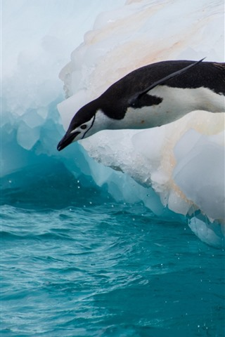iPhone Wallpaper Penguin, jump, floe, ice, sea