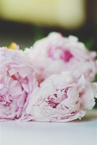 iPhone Обои Розовые пионы, цветы, букет, туманные