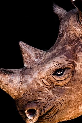 iPhone Wallpaper Rhino, head, horn, eye, black background