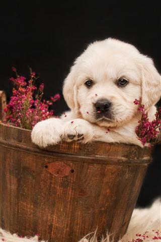 iPhone Обои Белый щенок, ведро, цветы