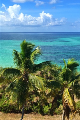 iPhone Wallpaper Florida, palm trees, coast, blue sea, sky, clouds, USA