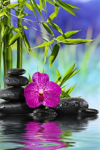 iPhone Wallpaper Bamboo, green leaves, stones, pink phalaenopsis, water, SPA