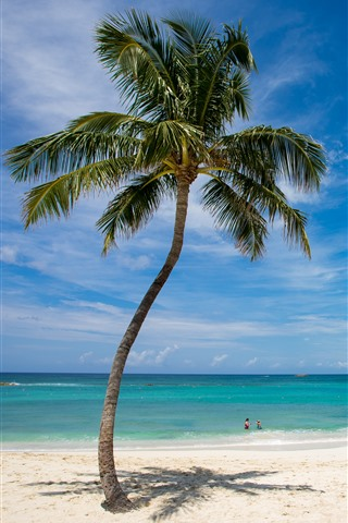 iPhone Wallpaper Lonely palm tree, beach, sea, tropical, blue sky