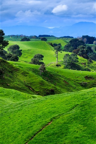 iPhone Wallpaper New Zealand, mountains, trees, green meadow, sheep